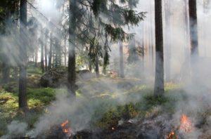 styggkarret-reserve-burning-fire-smoke